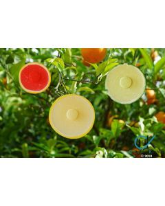 Charles Viancin Citrus Silicone Lids